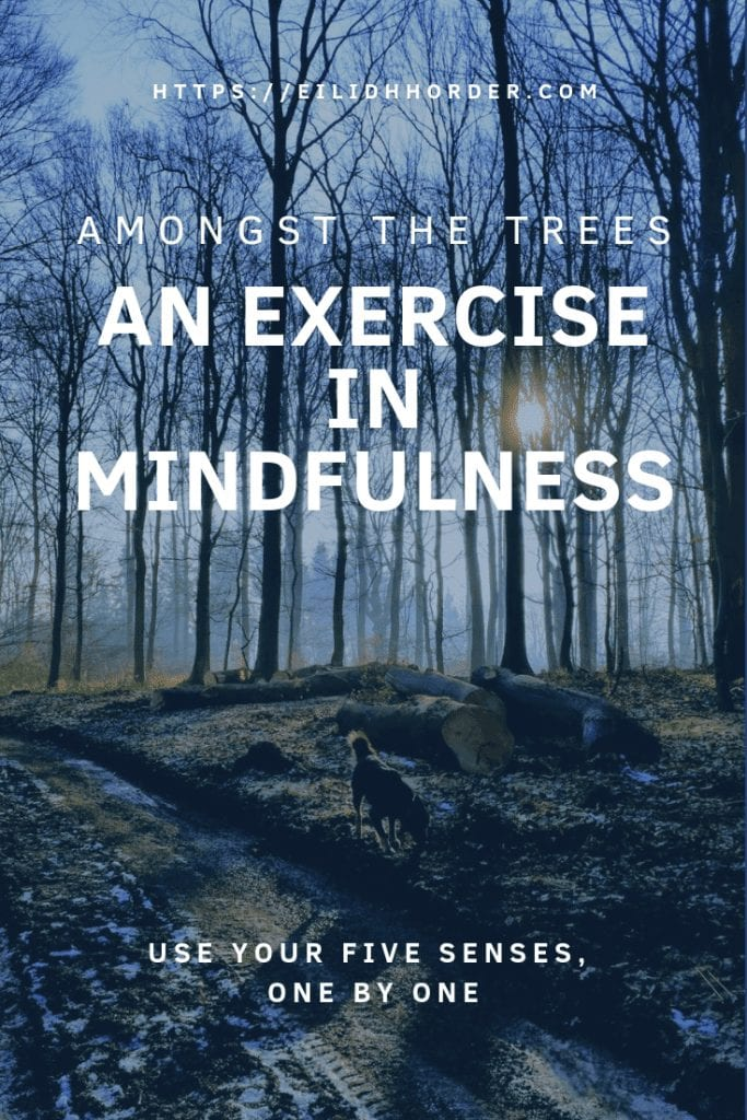 An exercise in mindfulness - I hugged a tree (and I liked it)