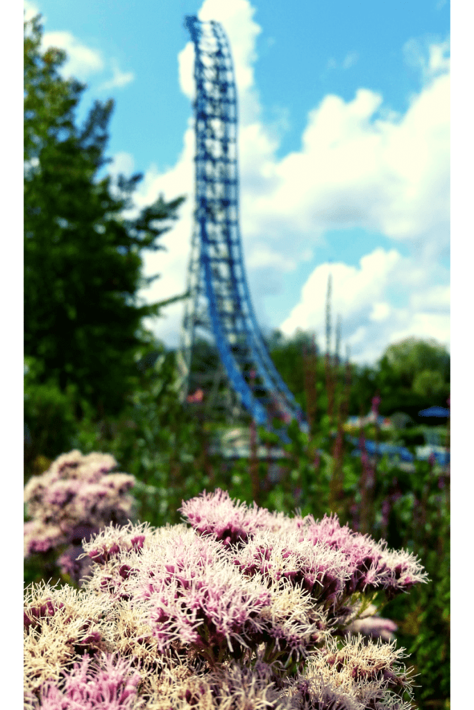 Fun fair ride - Flowers