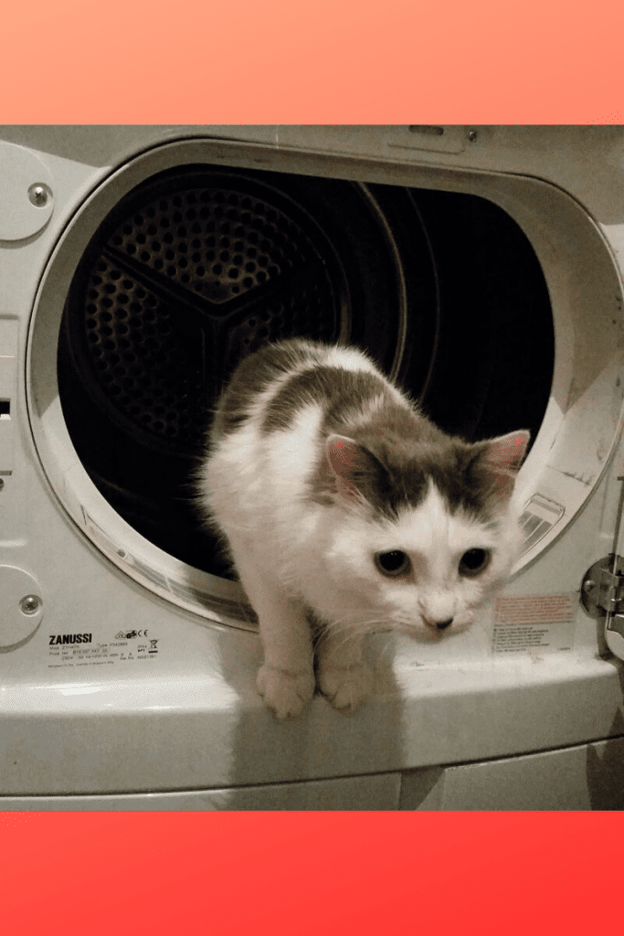 Suki the cat prepares to leave the washing machine