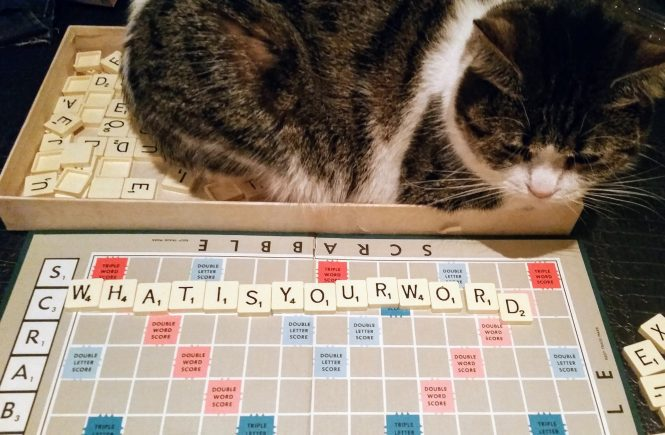 What is your word on Scrabble board with cat