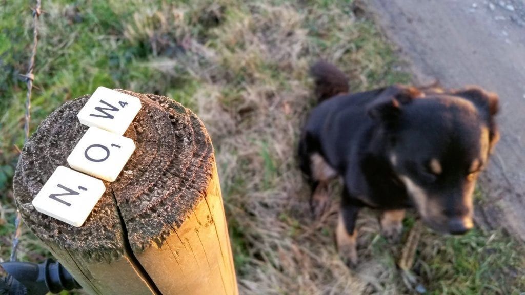NOW spelled in Scrabble letters on fence post and dog