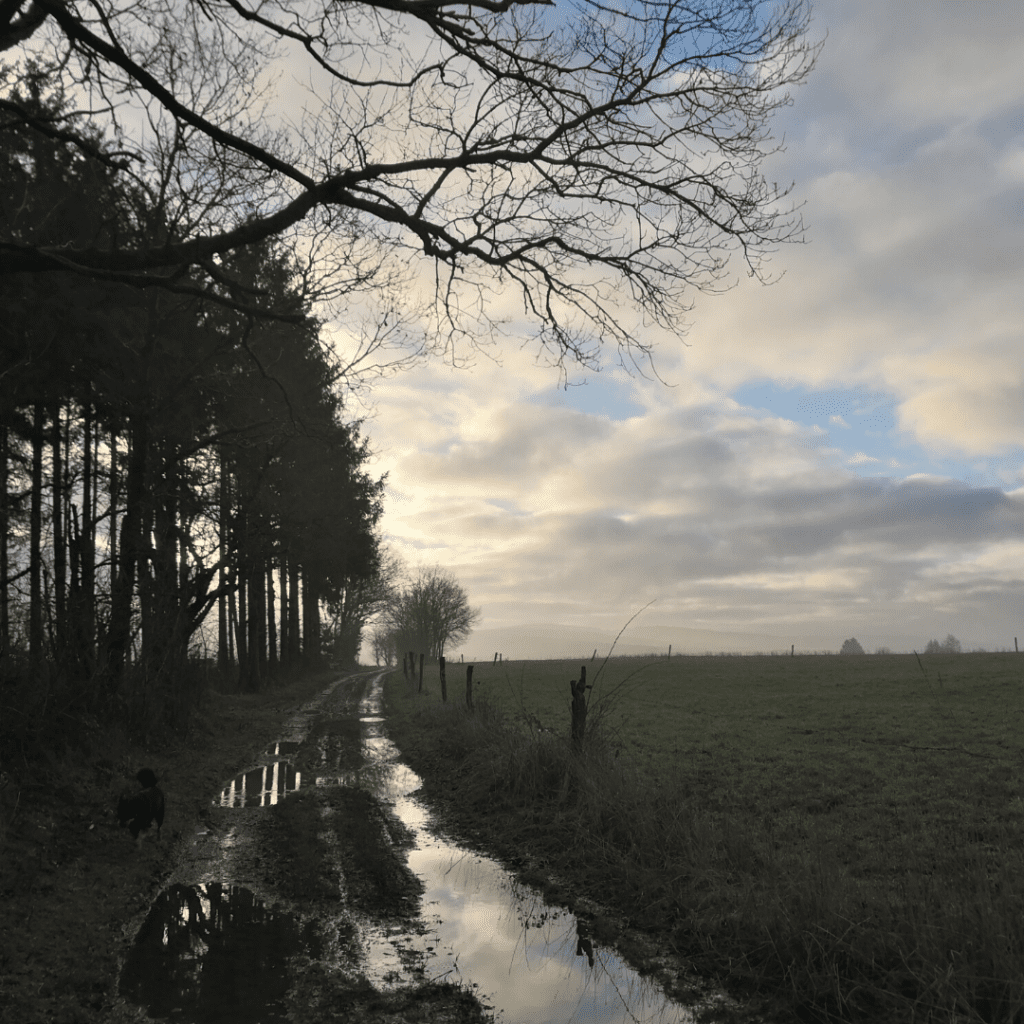 Puddly tree-lined path with field and blue cloudy sky