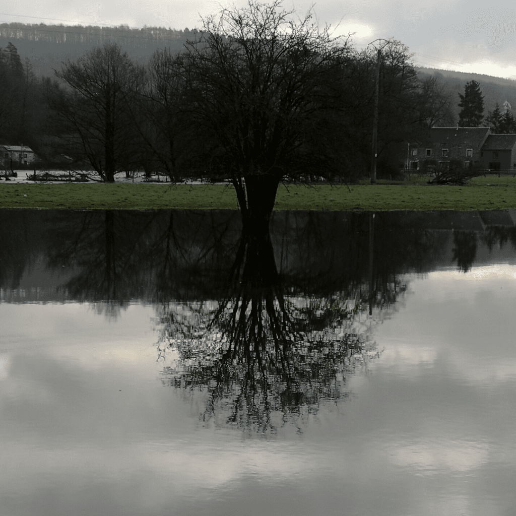 Reflection of tree in flooded field